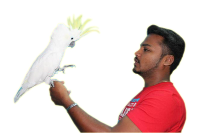Birds As Pets - TamedPets com - The Only Exotic PetShop in